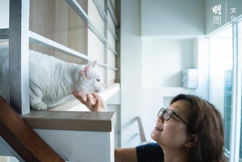 在艱難的日子,有三隻小貓與她齊上齊落,有病一齊受,有福一齊享。
