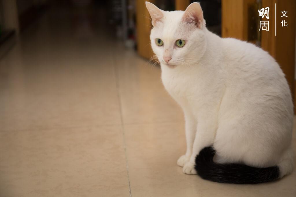 對張太來說,在香港最捨不得,就是家中的小貓(笑)。