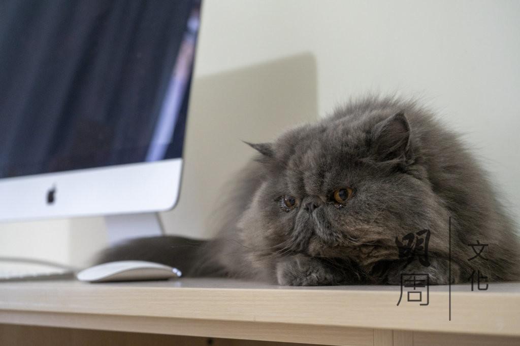 Kinki家中的貓兒,非常喜歡黏人,經常伴着她。
