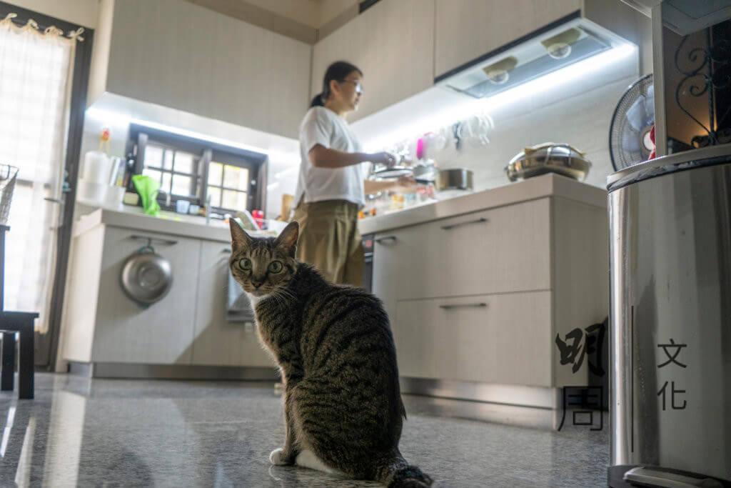 Rhonda一家還有兩個小成員,是兩隻可愛小貓兒,當初將牠們帶到台灣,也擔心牠們不適應。