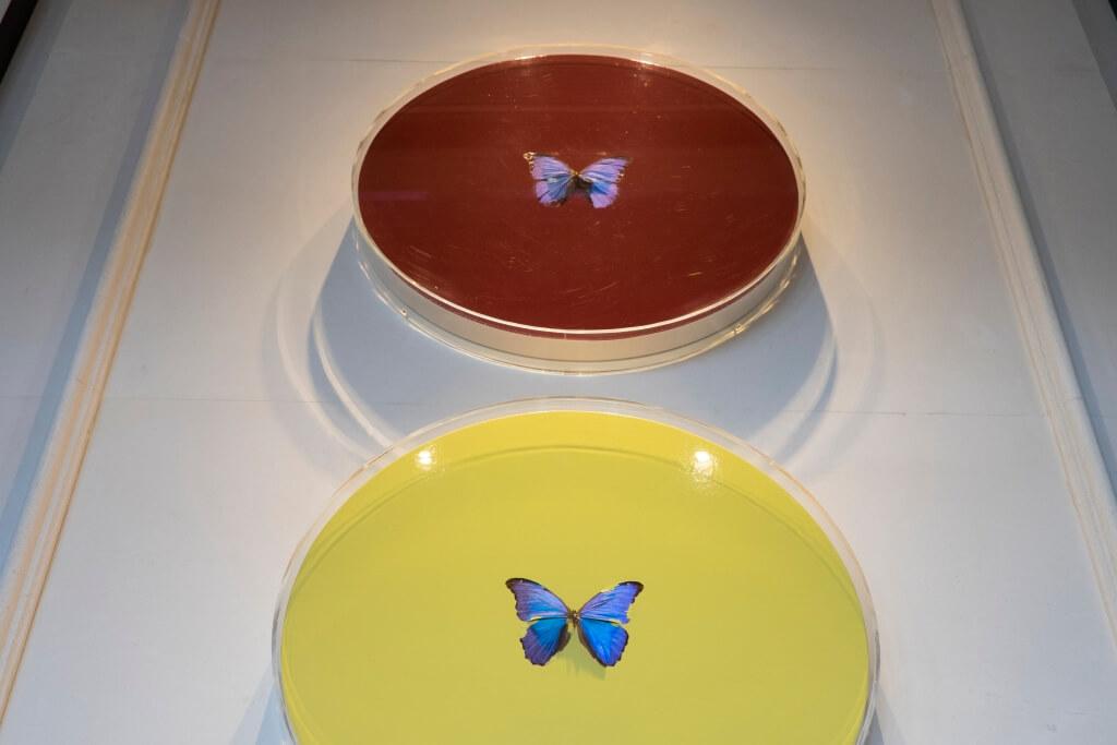空間主廳中央掛上了英國藝術家Damien Hirst以蝴蝶為題的藝術作品《Zodiac》,餐廳亦因以為名。