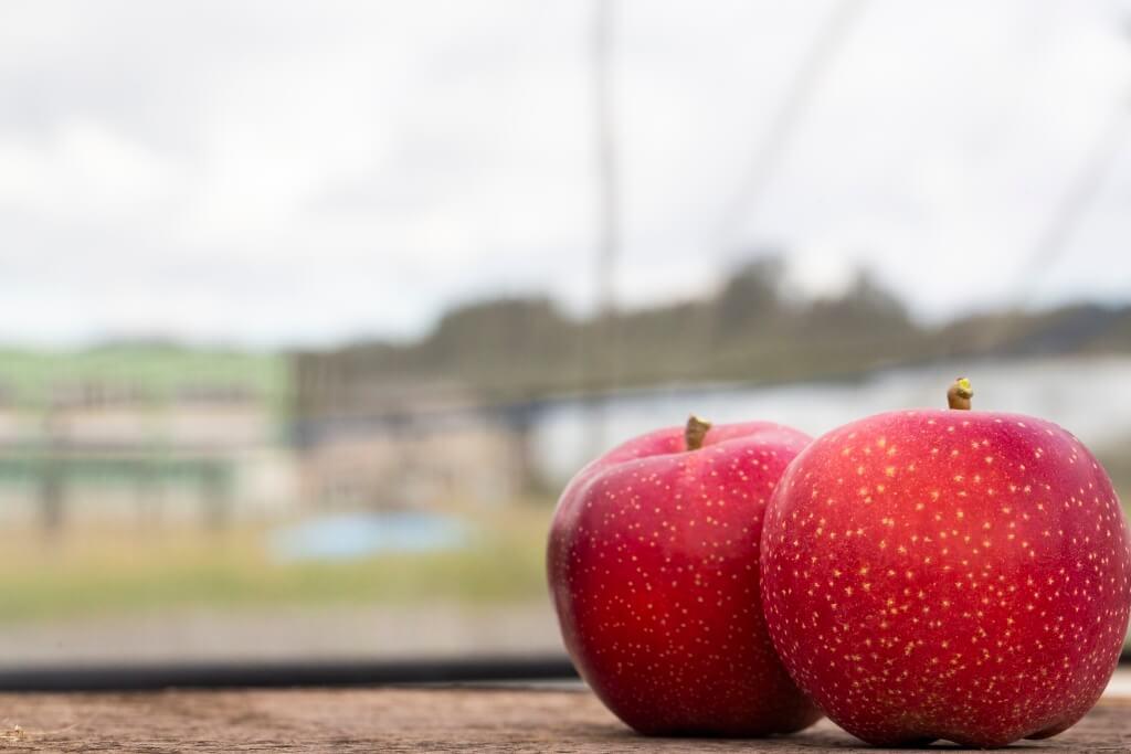 紅色皮,面上有一點點如雪花的白點,就是近年由蘋果研究所研發的品種之一,名為「千雪」。其特色是比其他果種的抗氧化時間長,放上三天也不變褐色。