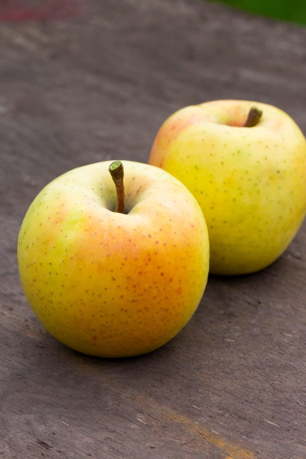 星之金貨擁有金黃的外皮,果皮比一般蘋果來得薄脆,一咬發出清脆的聲 音,甜酸比例得宜。