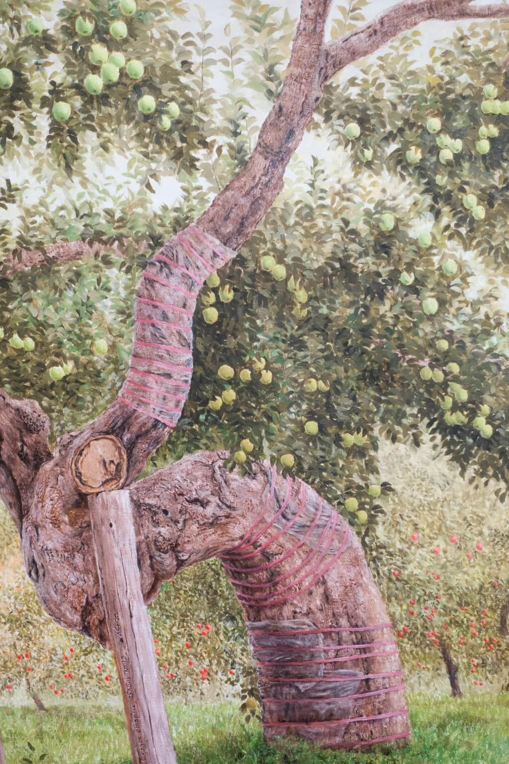這裏收藏了畫像,記錄了其中一棵最老的蘋果樹,其樹齡長達一百三十多年。據所長說部分樹幹已被侵蝕得空心了,所以要加支架鞏固。