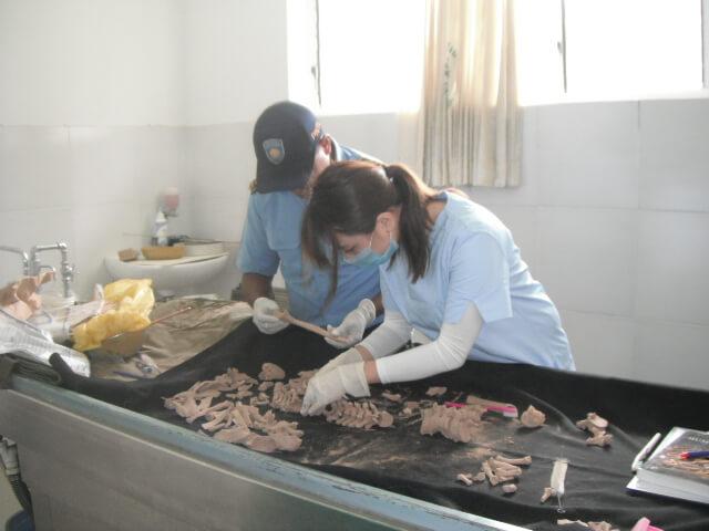 在東帝汶處理的骨骸的案件