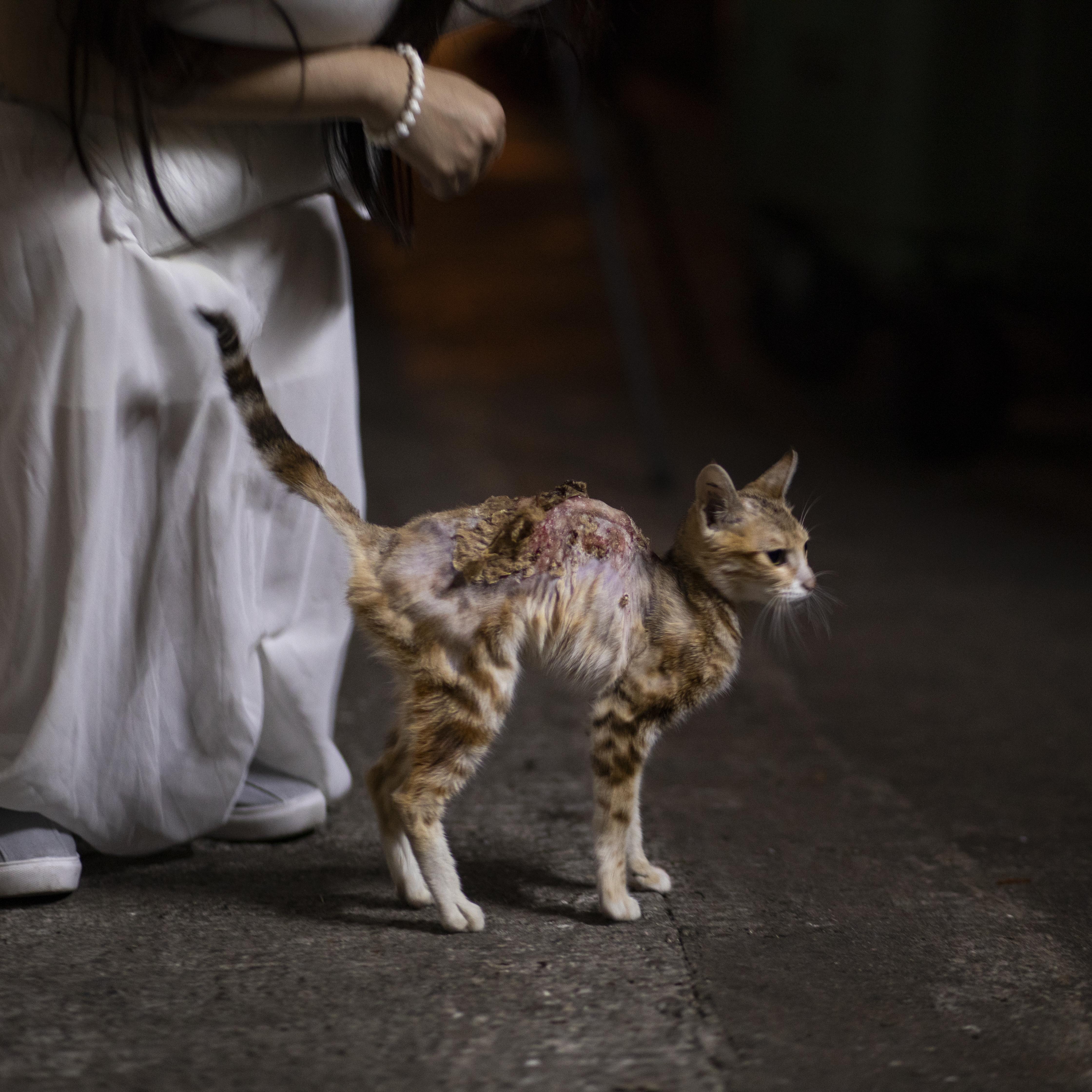 Max第一次遇見花生時候,它頸部至尾部出現傷口糜爛出血的情況。