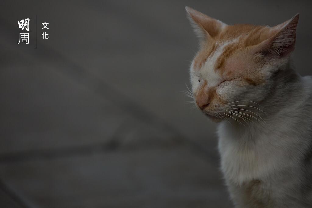 不少貓義工費盡心思照顧流浪貓,於示威進行之前已經警覺地通知一林與其煙霧隊成員,快速救貓。