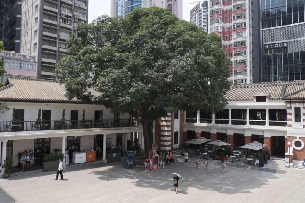 前中區警署警察總部大樓前的空地名為「檢閱廣場」,昔日人稱「大地」,為警察操練及接受檢閱之地,活化後則變成舉辦文化藝術節目的露天空間。廣場上,有棵大樹屹立不倒、茁壯成長數十載,傳說那是棵「升職芒果樹」,每當該樹開花結果,警隊就會有人升職。