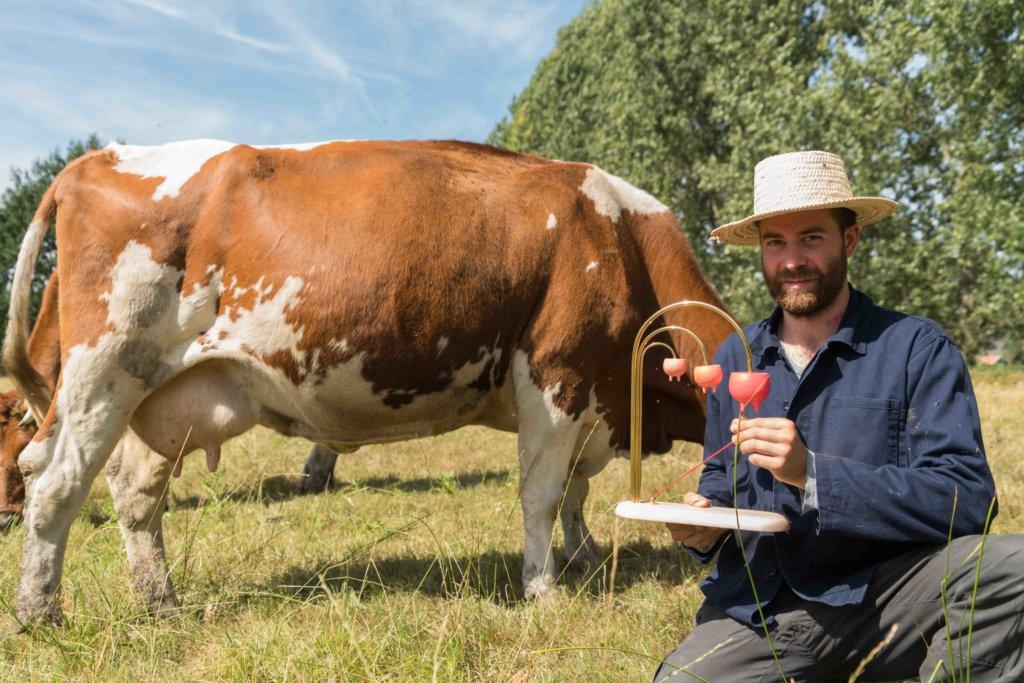 奶量總是上升獲獎牛隻