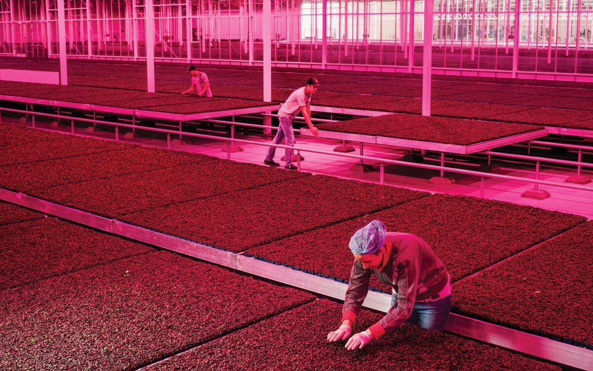 今時今日的高科技室內種植,雖然具備所有令作物生存的條件,但全是人工化和機械化。