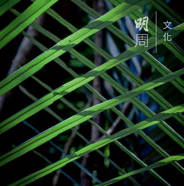蒲葵 Livistona 棕櫚科下的一個屬,外來物種。