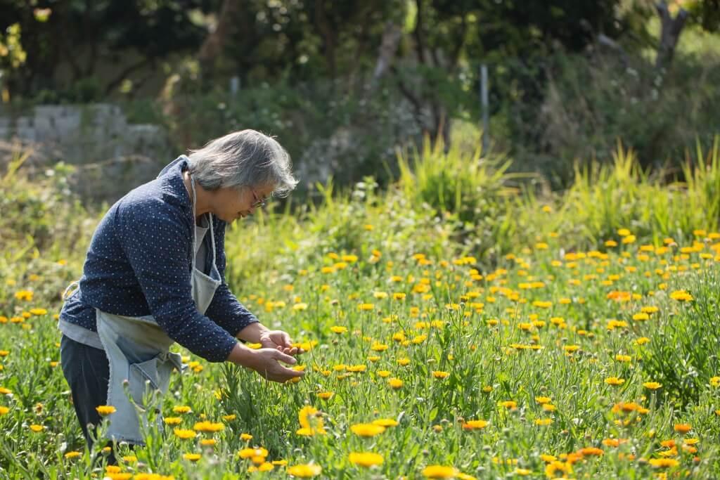 從本地有機農阿竹身上看見了農夫的特質,富毅力。經過不斷嘗試,從歐洲種到中國種,年復年研究才能種出如此鮮艷、健康的金盞花。