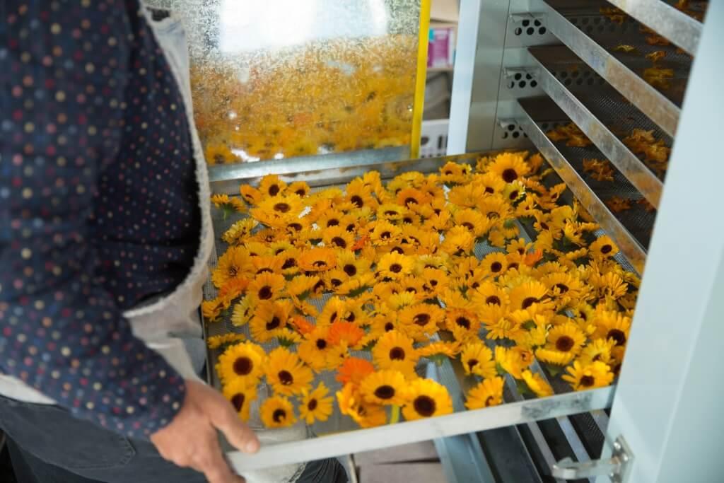 由此其味道太濃帶苦,少作鮮吃,所以多把花蕾烘成乾來使用。