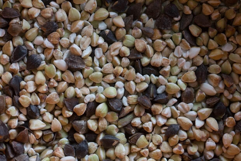三角狀的蕎麥,若呈米白色正是已脫殼、剛好成熟時。太青太黃是未熟或熟過頭,至於深灰偏黑的則是連殼的模樣。
