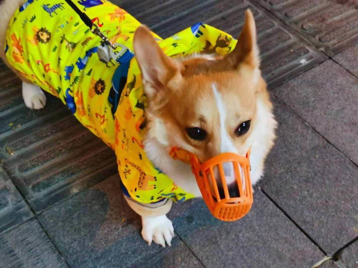 即使有風險,武漢市民熊欣還是會待著狗出去散步,讓愛犬活動一下脛骨。圖片由受訪者提供
