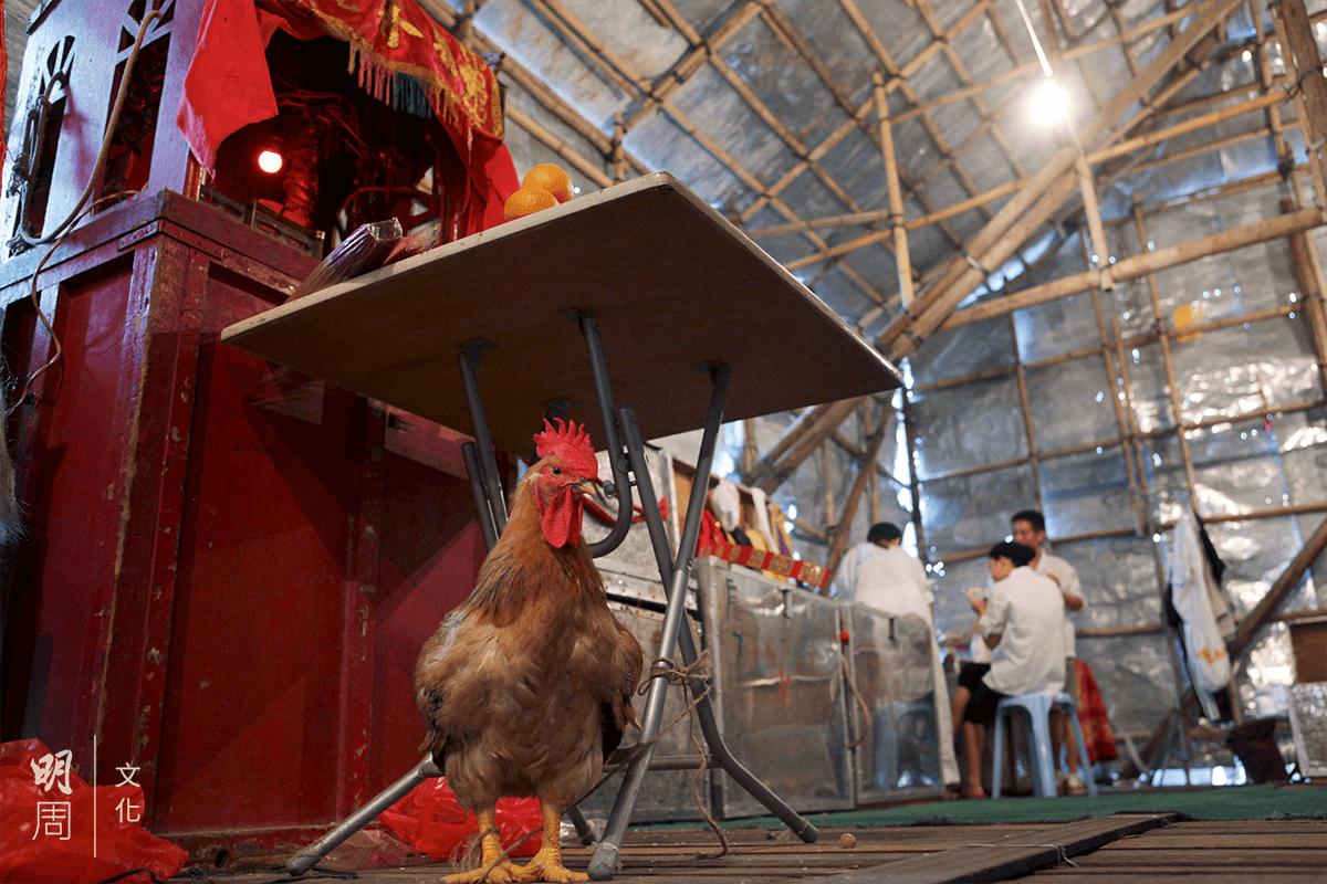 潮劇戲棚神枱下一般會有一隻公雞。戲班相信,公雞陽氣重,可避邪看家。