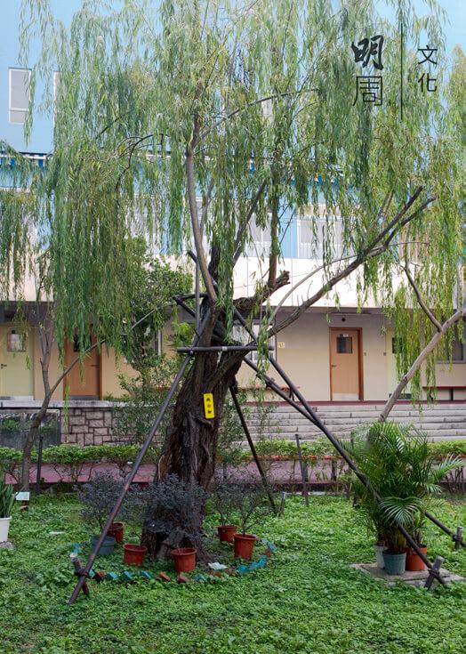 錢穆親手栽種的柳樹被命名為錢公柳
