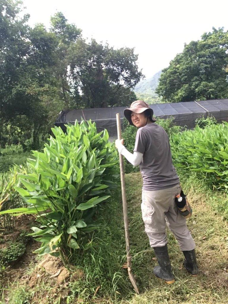 Teresa在荔枝窩負責種薑的農務,上泥、除草一一包辦。