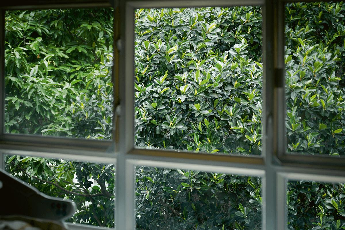 寧養院病房外的一片綠色安撫着病人和家人的心靈