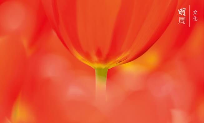 單親的延續:半朵花也是完整的一張照片,猶如單親。(圖片由Bonny提供)