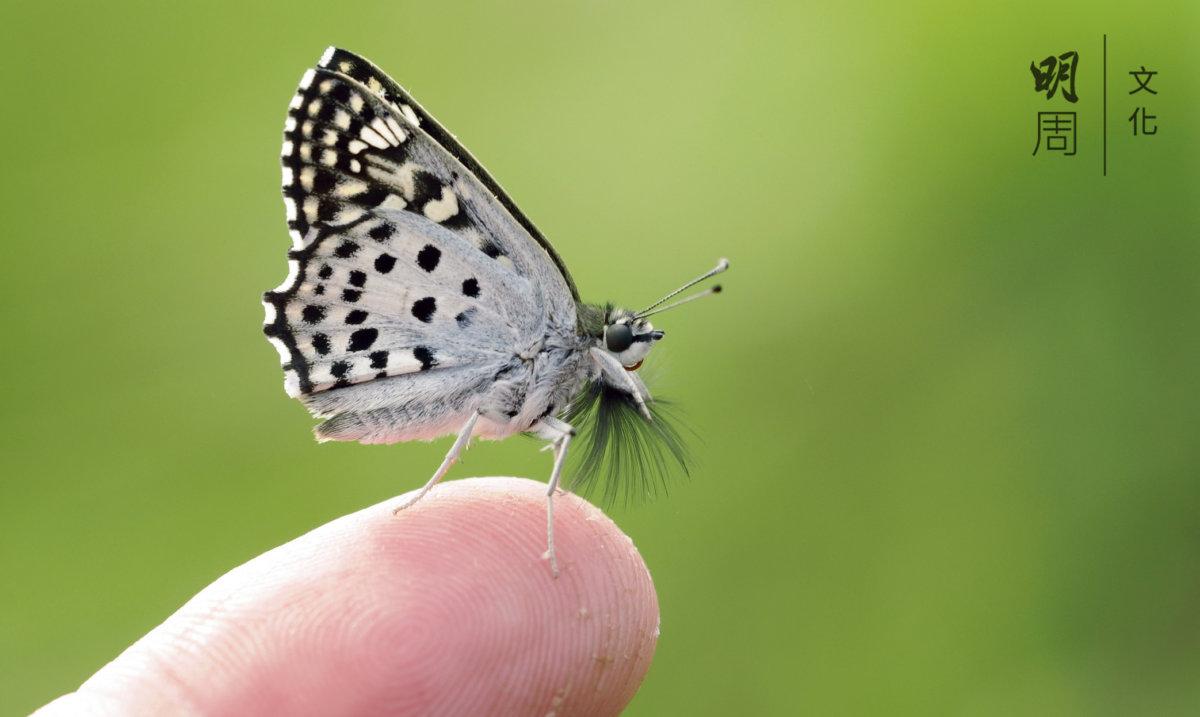 重拾互信:走到大自然,展開本真的自己,回到原始狀態的情感中,感受草木皆有情。讓此情再度起步,重建人間之互信。(圖片由Bonny 提供)