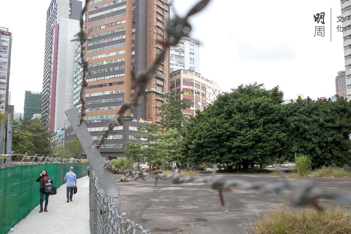 大樹是彩虹軍營留下來的遺產,是香港歷史的一部分。