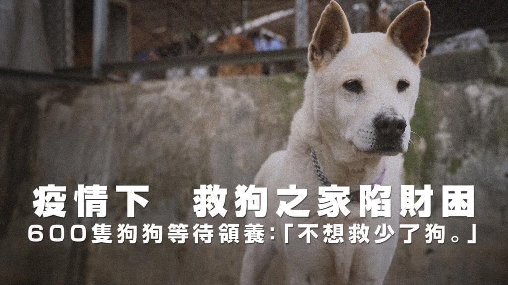 20200414_dog