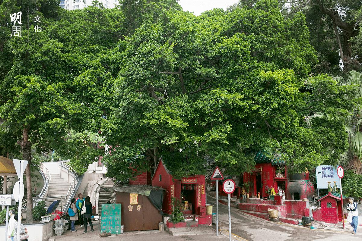 香港仔舊大街榕樹下有中醫舖,為街坊帶來古法醫病體驗