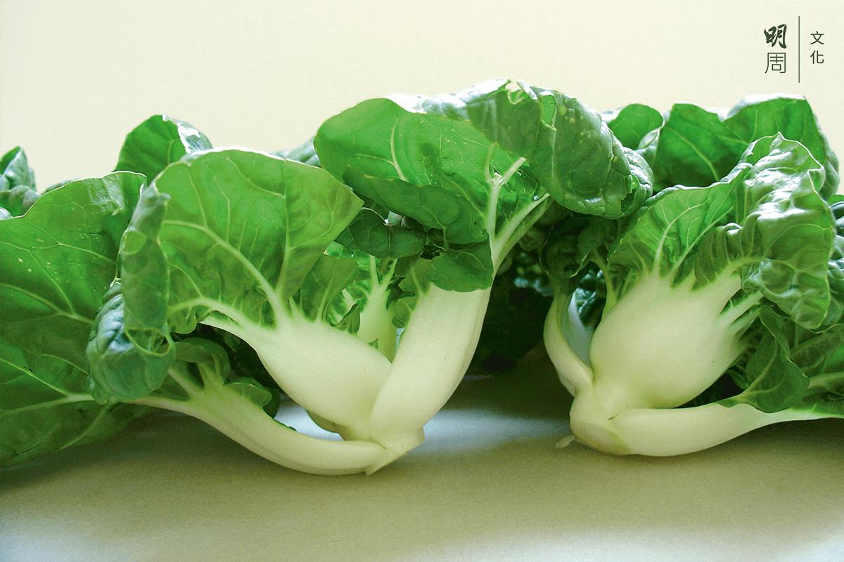 漁護署近年篩選出來的最接近鶴藪白菜的品種 (圖片漁護署提供)