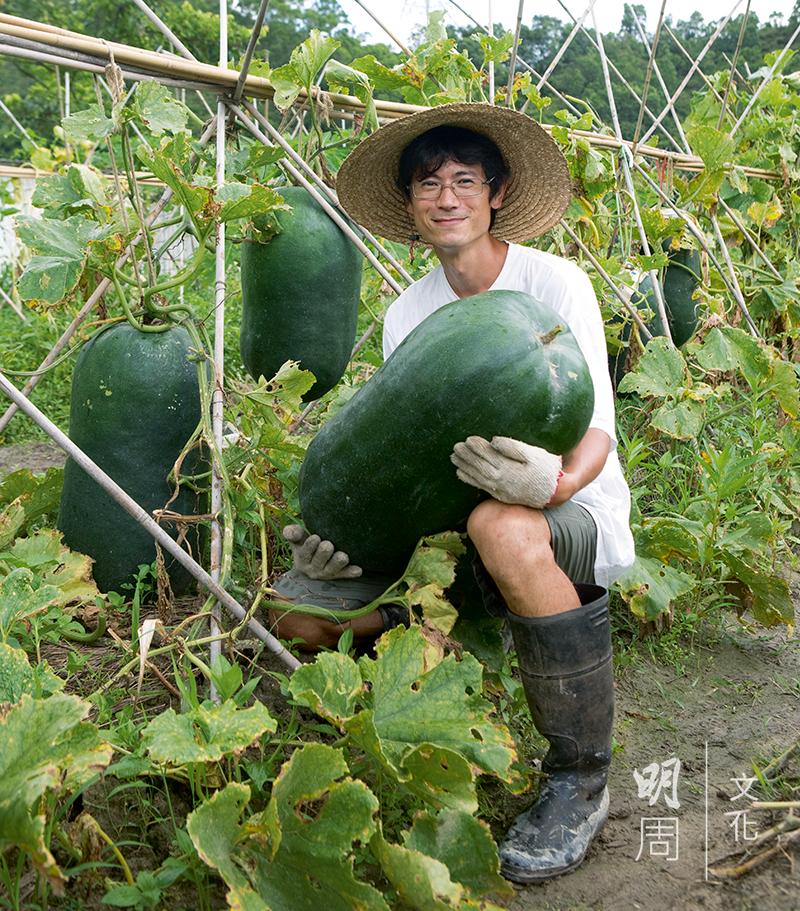 葉家的青皮冬瓜,種到四、五十斤乃等閒之事,是市面上罕見的品種。