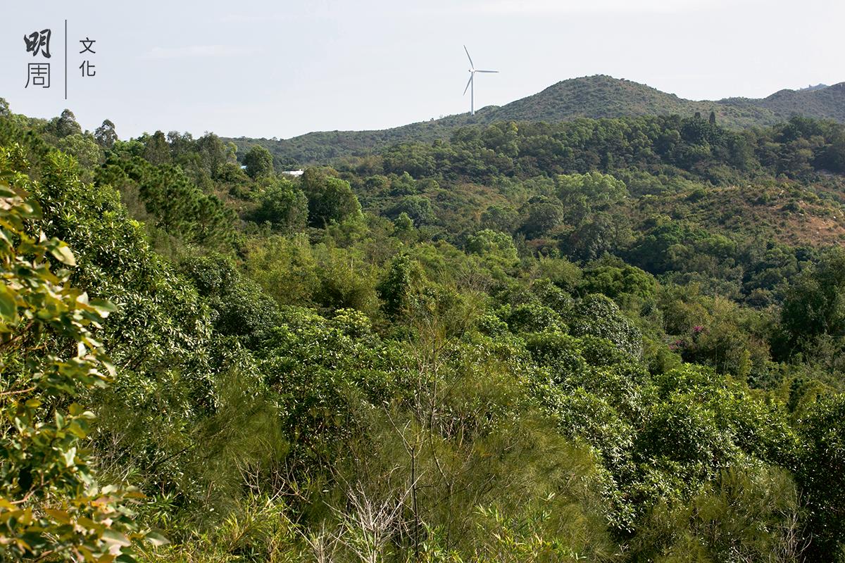 貧瘠的山頭轉化成青葱茂密的綠洲,一個充滿活力的生態系統。
