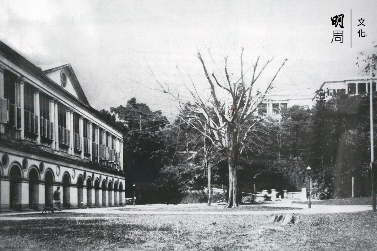 舊政府總部中座正門外的紫檀樹在 1895年已是高大挺拔,百年老樹見證着時代變遷和無數次示威遊行請願,聆 聽市民的心聲。自回歸後,政府合署外圍加裝鐵欄,紫檀樹似是被隔離。
