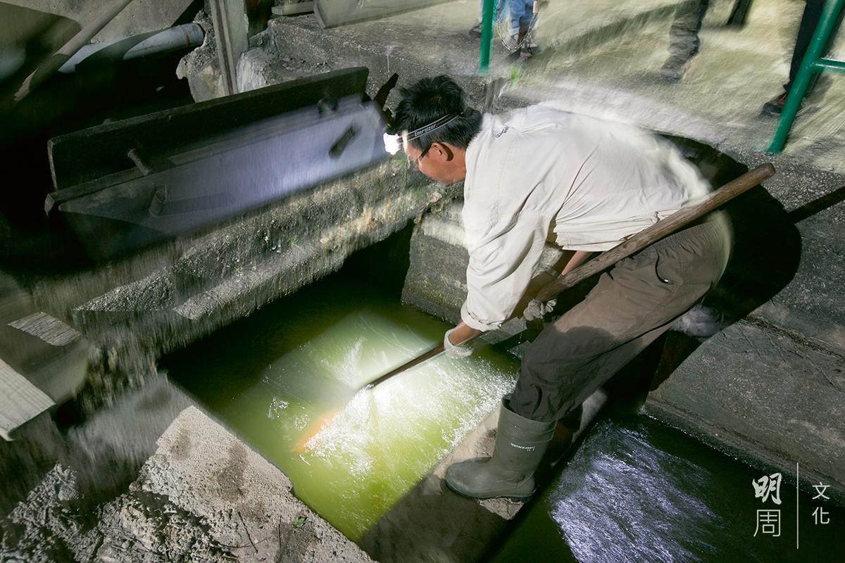 十五分鐘內,有兩公斤的魚蝦落網。本地基圍蝦身體圓潤,動作機敏。