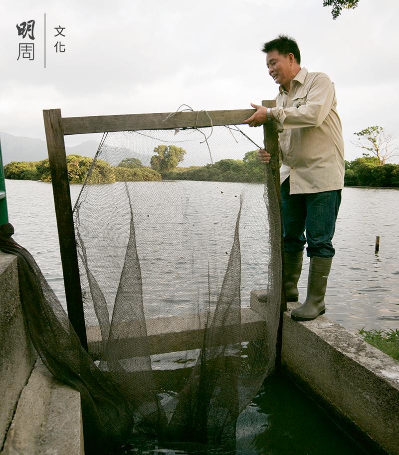 天快黑了,陳啟光在閘門先設好捕捉蝦網。