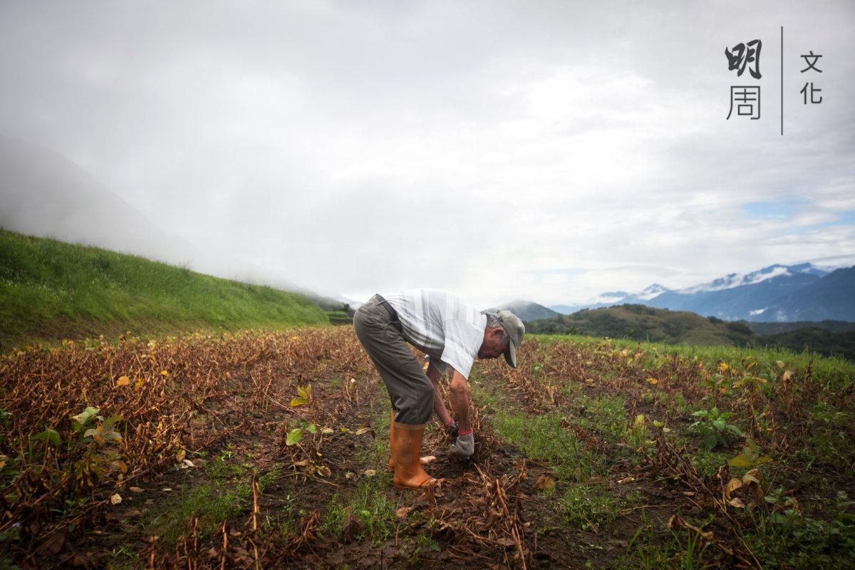 十年前開始投入有機耕作,林運枝說雖然辛苦,卻保證了食物安全和味道鮮美。