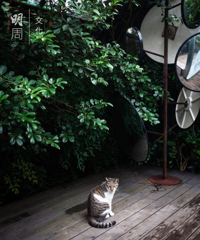 台北隨處可見小咖啡館,外有綠 色景致。