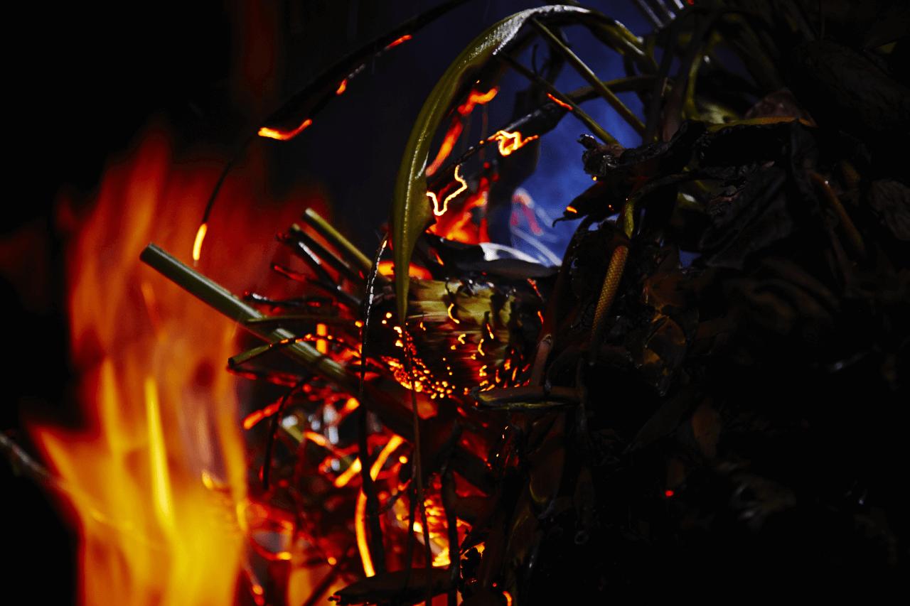燃燒中的花,別有一番帶毀滅性的美態。