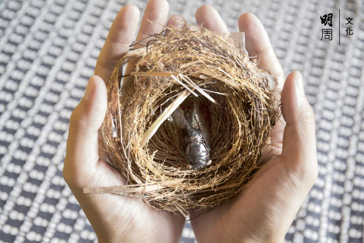 風雨中跌落的鳥巢、蟬標本,周遭生態環境凝固的瞬間。