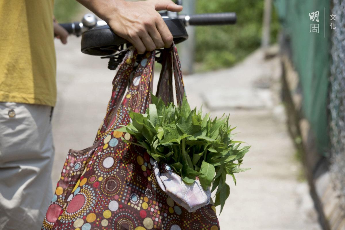 到鄉土學社的田裏買菜。