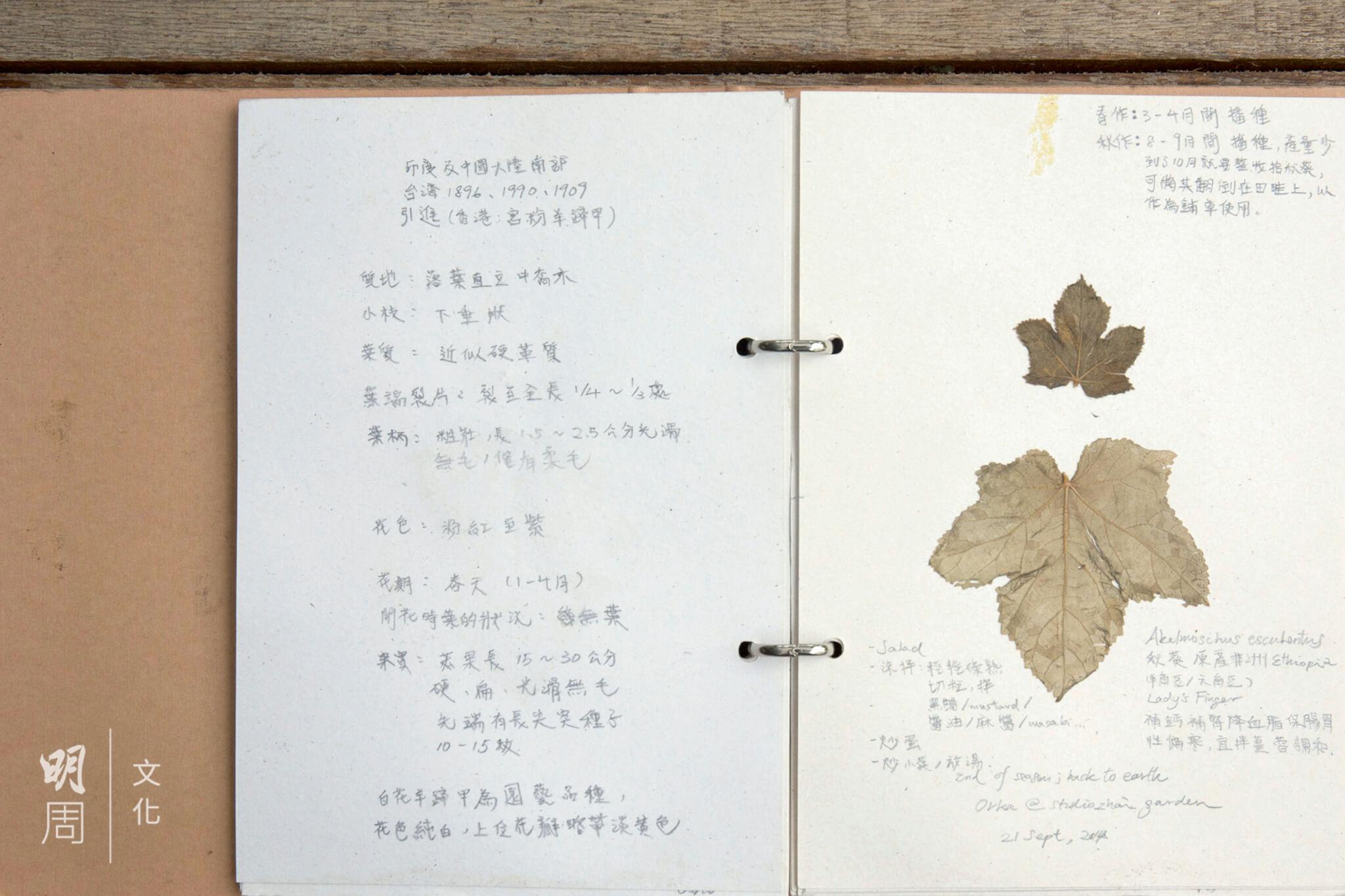 另類的葉子日記,從另一個 角度認識身處的地方。
