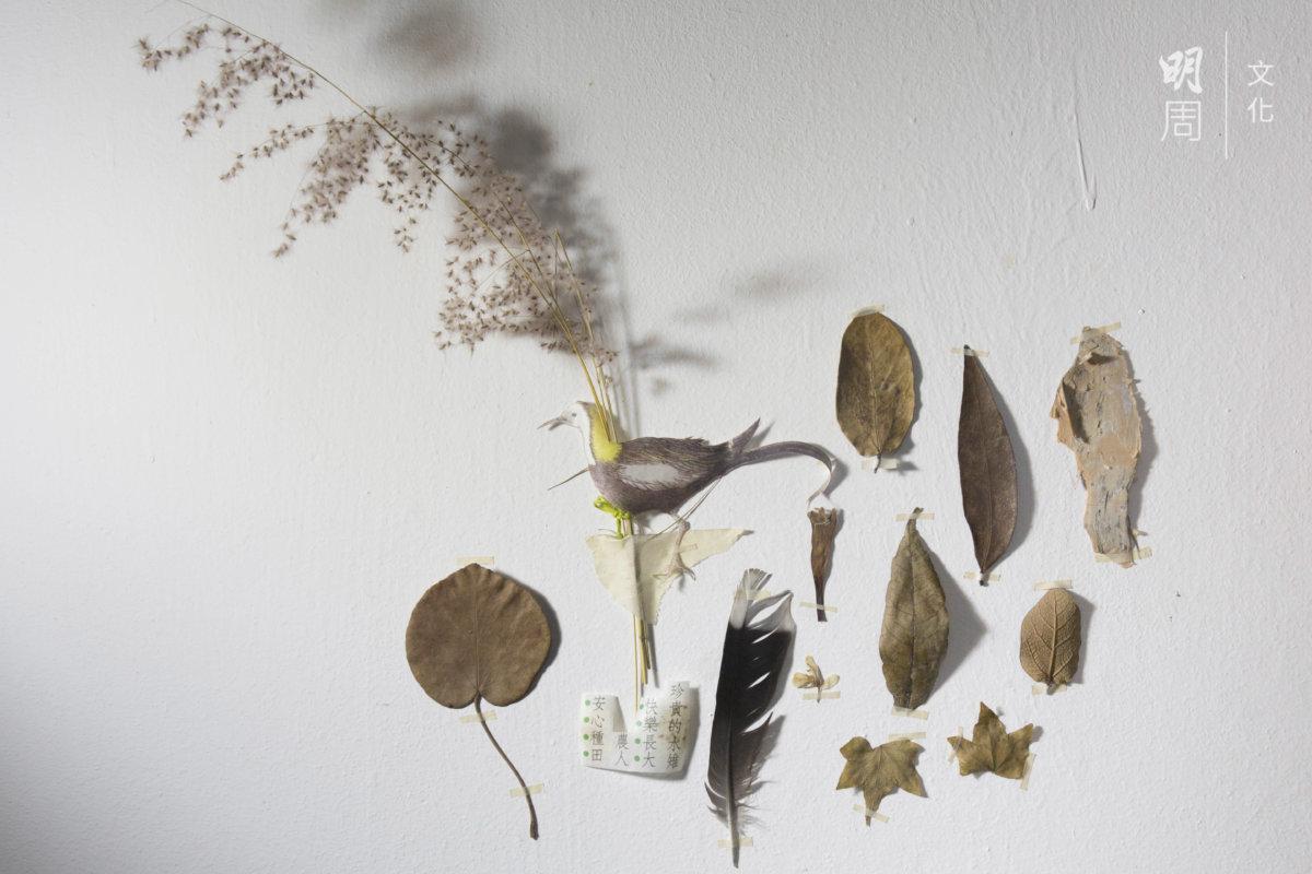 靜怡搬進土丘後在日常生活收集到身份未明的落葉、 炮仗花花瓣、梧桐河畔拾到的羽毛、田上偶爾發現充滿檸檬香但有倒鈎的不知名植物的葉片、百千層的樹 皮、田上秋葵的葉⋯⋯水雉圖案是從台灣一包有機米 的包裝紙上剪下,說着人與萬物共存的理念。