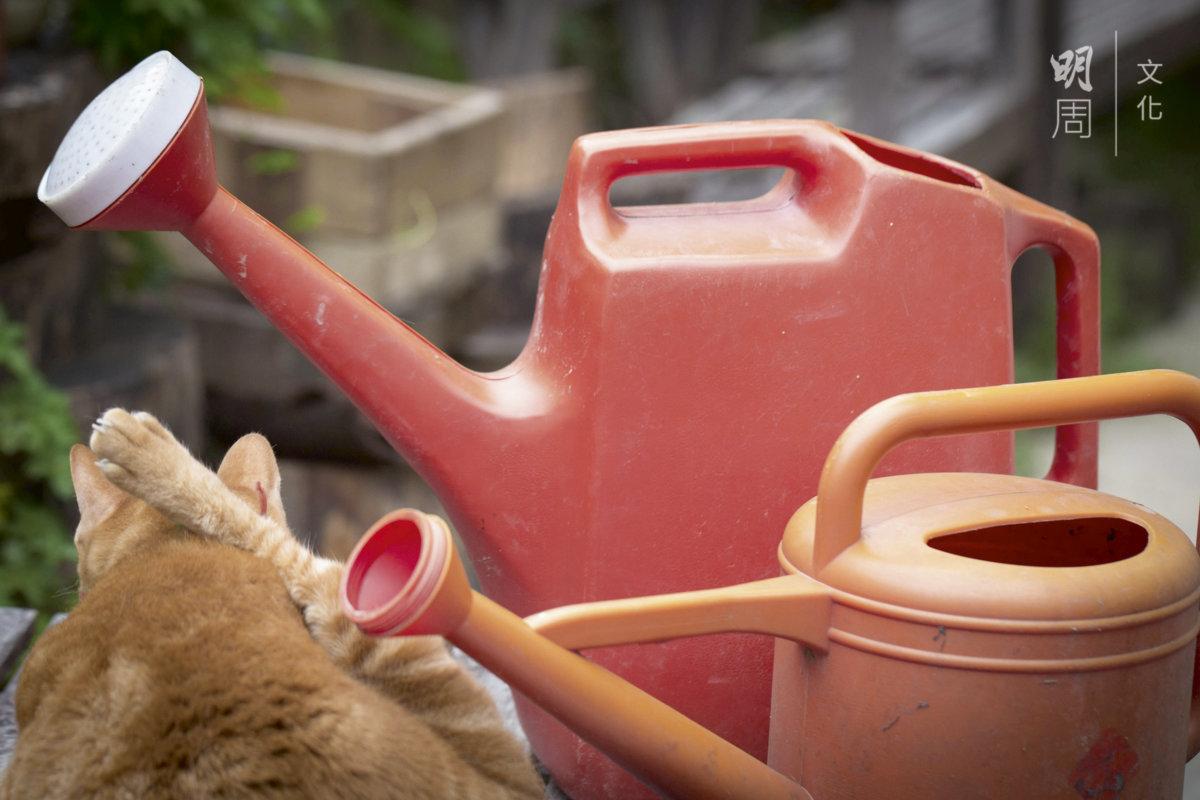 從灣仔富德樓遷居土丘,小貓Bubu習慣了從城市到鄉村的生活。