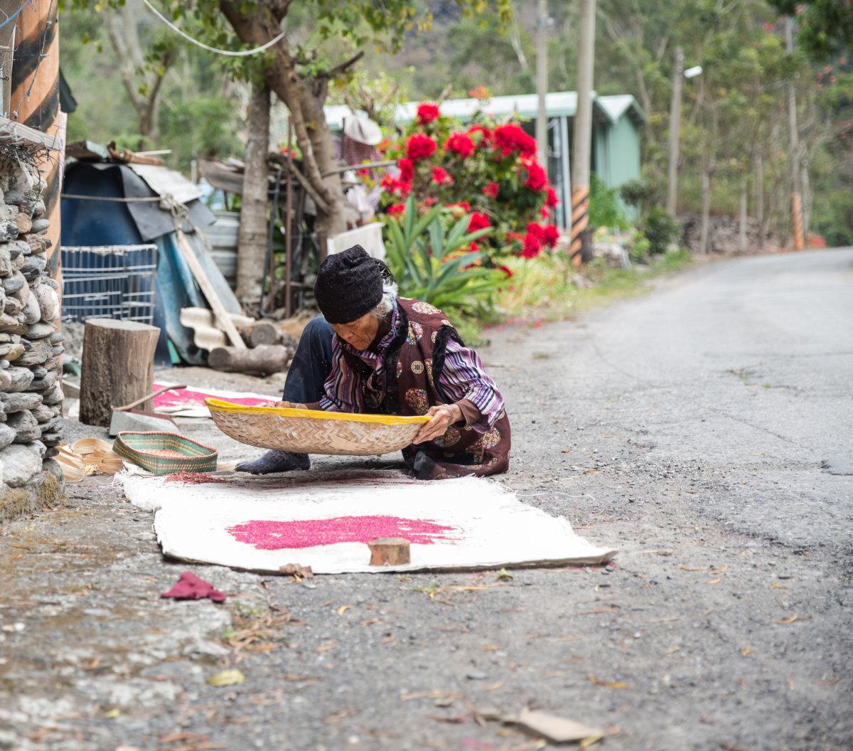 原住民的老人到八九十歲還是繼續務農,大武部落的婆婆在曬紅藜。
