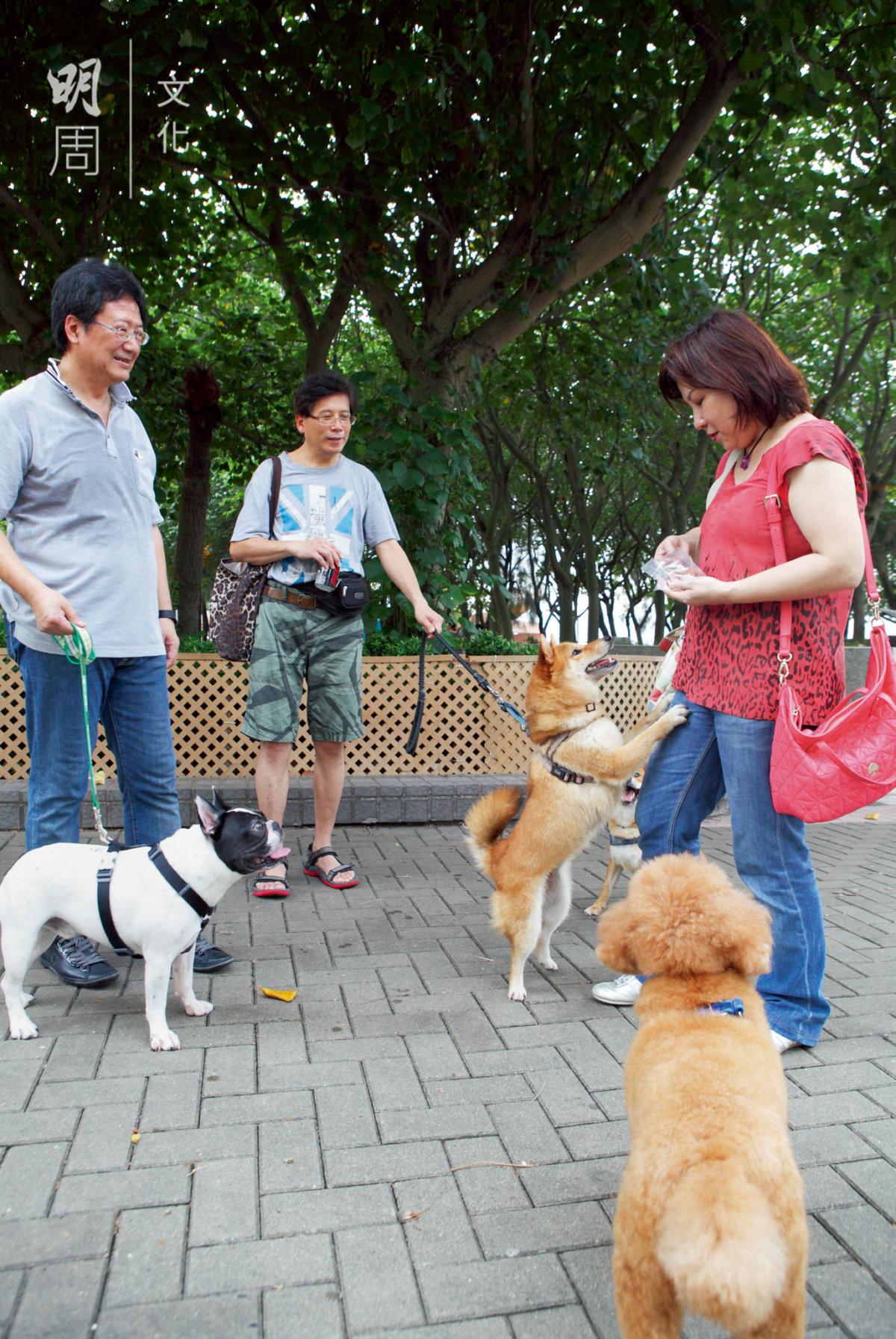 Josephine和Peter帶愛犬 「烏豬」去會街坊狗友