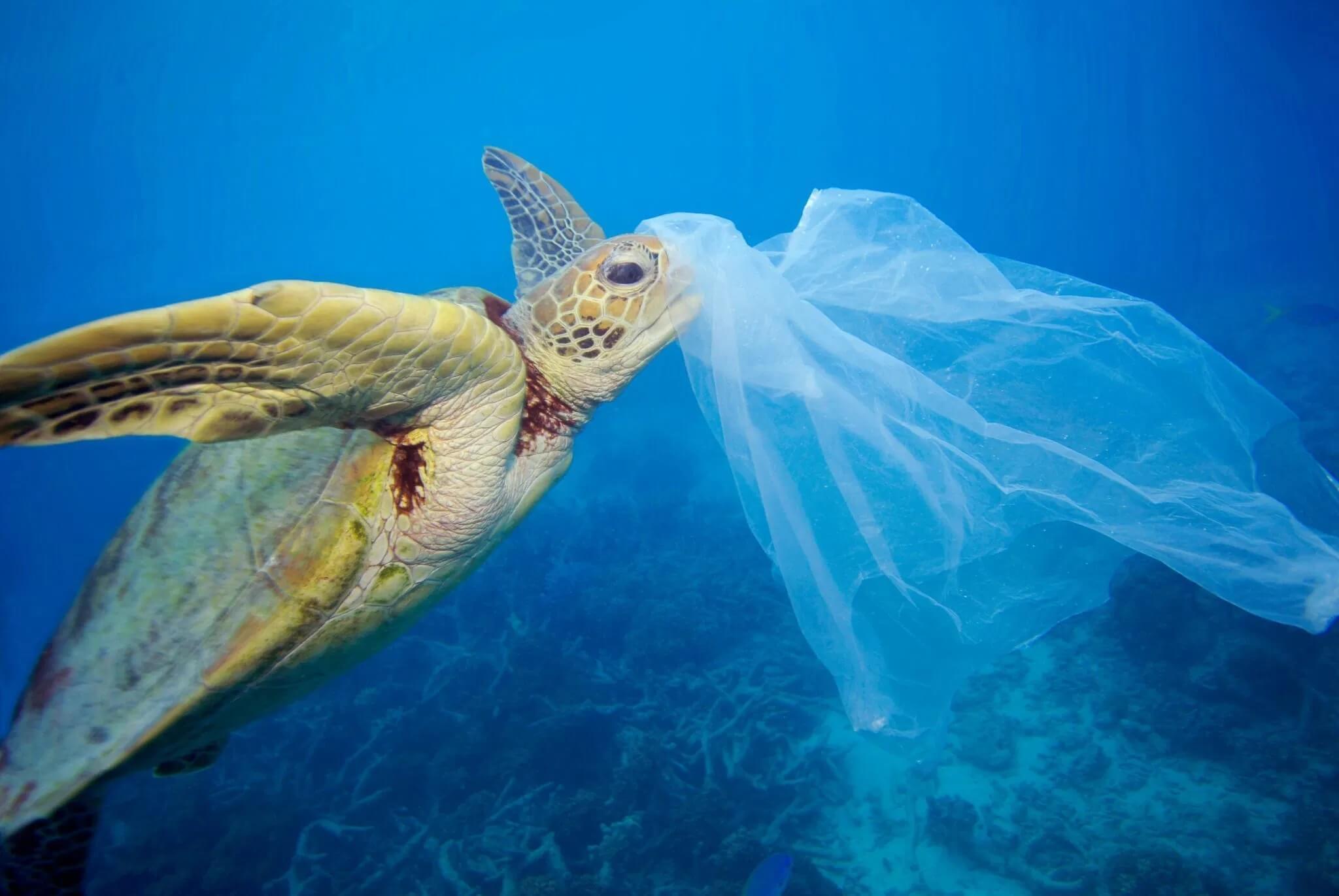 一堆又一堆的塑膠新聞,讓大家都會對塑膠有負面的印象。