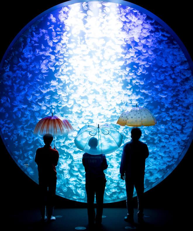 水母日文為「クラゲ」,漢字寫作「海月」,讓人聯想起水母的輕盈舞姿
