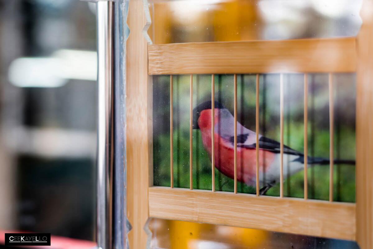 法國及葡萄牙籍的視覺藝術家Frederic Bussiere跟隨香港最後一位雀籠工匠陳樂財學習,作品「Piu-Piu」靈感來自電車和鳥類身體之間的動態。