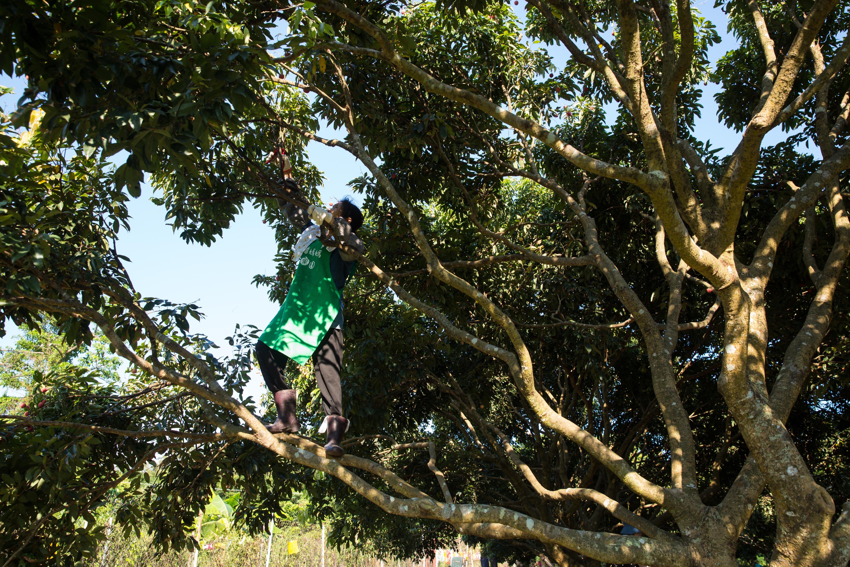 潘媽媽嚴令來客不得上樹。轉個頭,就見她爬上荔枝樹折下果實,身型矯健。