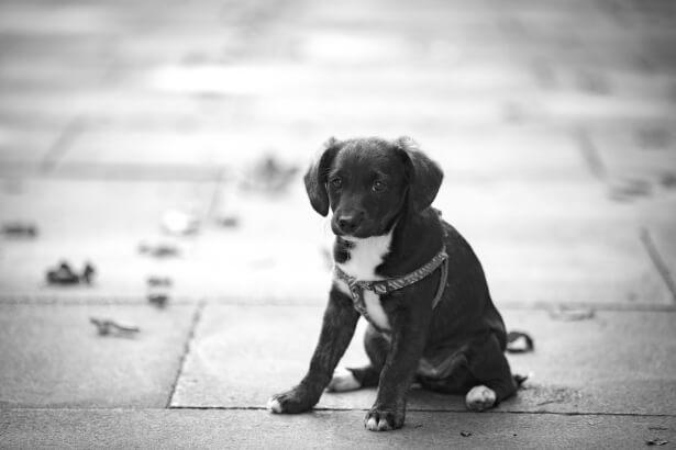 puppy-dog-1475064041jnm