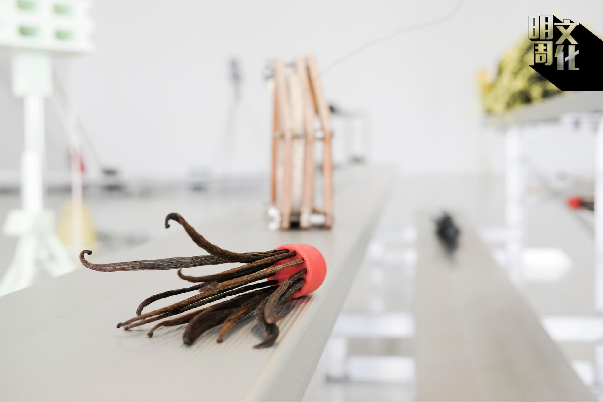 橡膠製的球頭和香草豆莢「羽毛」,代表了謝淑妮家人的辛酸史。